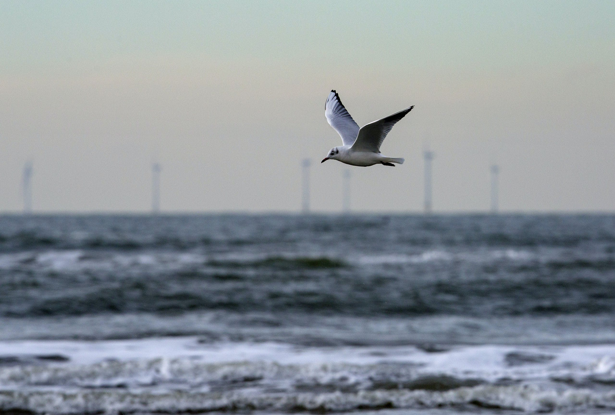 Nederland, Egmond aan Zee.